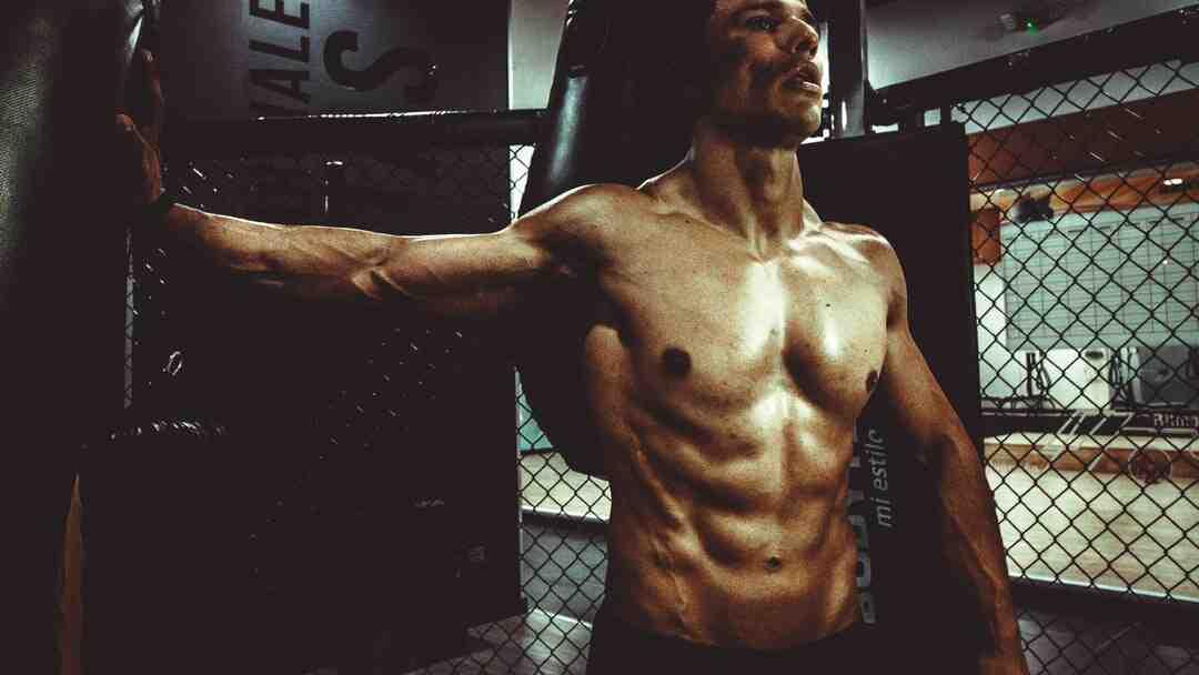 Programme musculation prise de masse pdf
